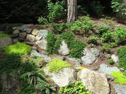 Natural shade garden