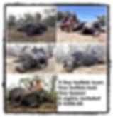 buffalo website.jpg