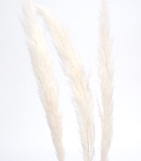 Medium Pampas - White