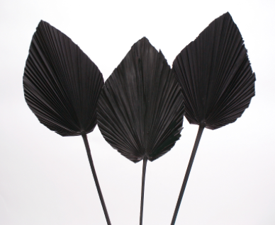 Dried Anahaw Leaf - Black