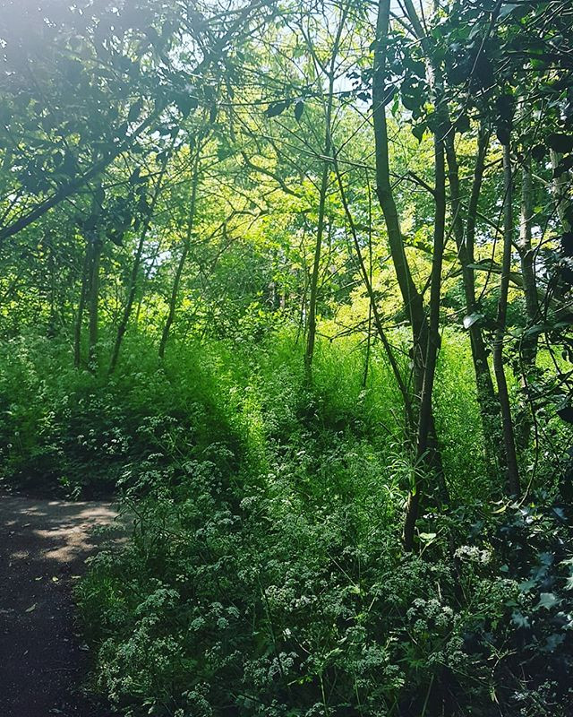 I am so lucky to live near some gorgeous fields and woodland areas