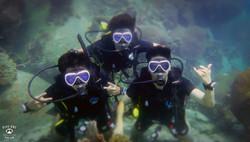 태국P8314377꼬따오다이빙