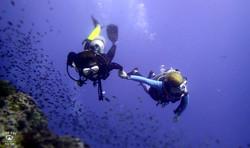 꼬따오P5202496스쿠버다이빙