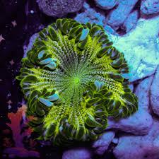rock flower green