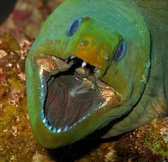 greenmoray2