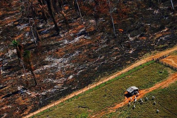 Desmatamento-Amazônia