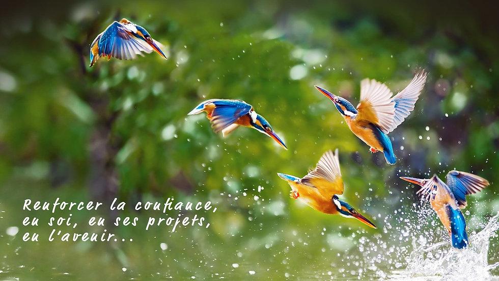 photo-colibri-avec-légende-v3 (1).jpg