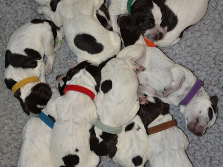 Pile of PUPPIES!!!
