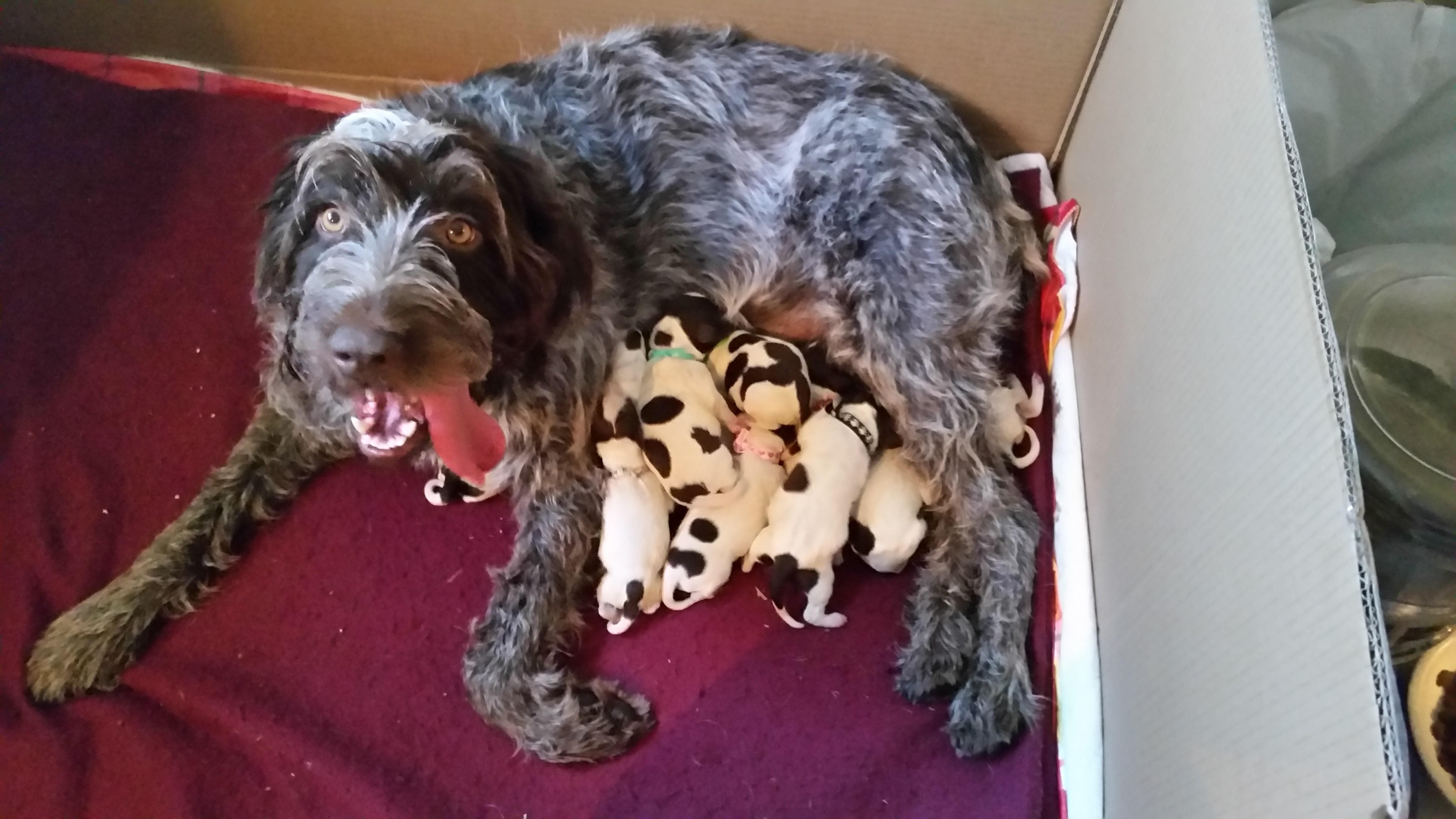 Mavis and her pups 2016