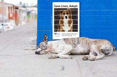 Clear the Shelters PSA Posters