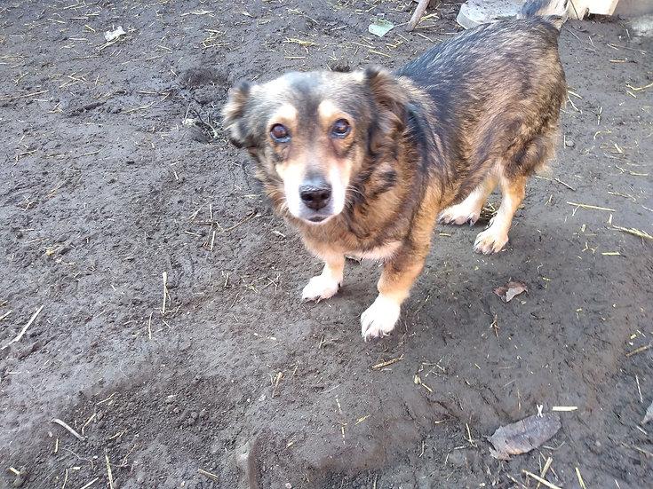 Tora, 11 years
