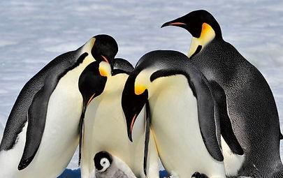 penguin-min.jpg