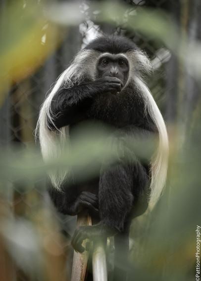 Pattison_Animals-1.jpg