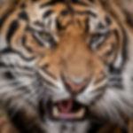 Pattison_Animals-2.jpg