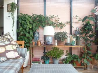 house-plants.jpg