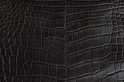 Crocodile - D.Brown