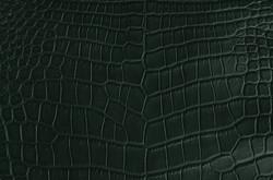 Crocodile - Green