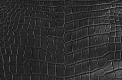 Crocodile - Glay