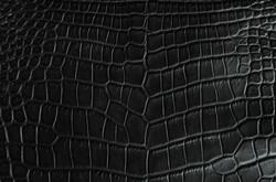 Crocodile - Black