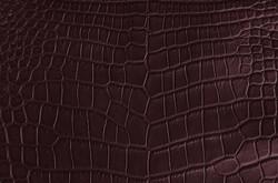 Crocodile - Bordeaux