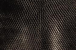 Lizard - Black