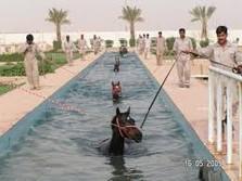 Horse long Pool