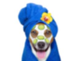 Wellness Beauty Mask  Spa  Dog.jpg