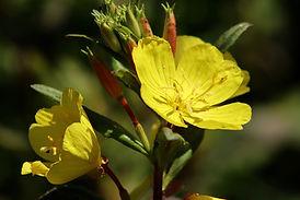 flowers-4317047_1920.jpg