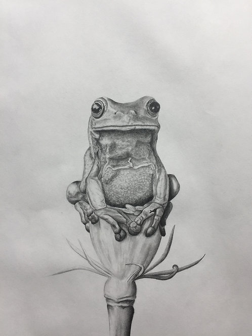 Frog on a flower, original drawing