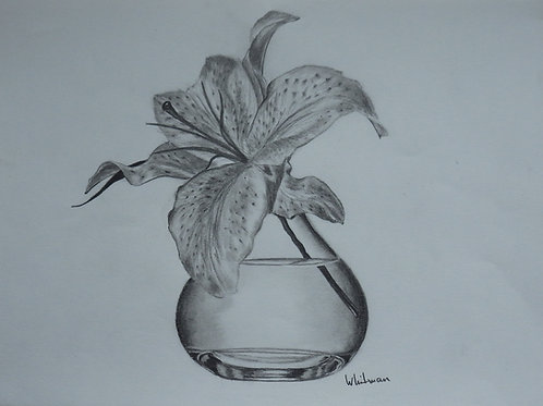 Lily in a glass vase, original drawing