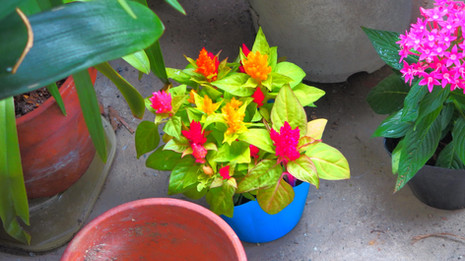 生植物とティーカップ