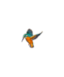 kingfisher_2_edited.png