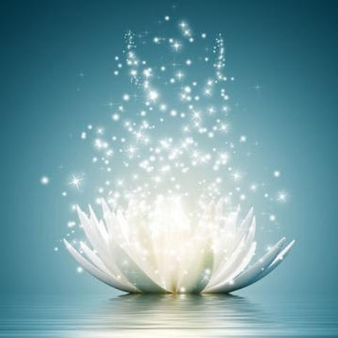 Lotus blanc jaillissant.jpg