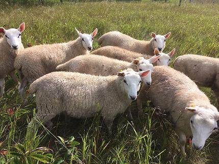Lambs Ash Paddock.JPG