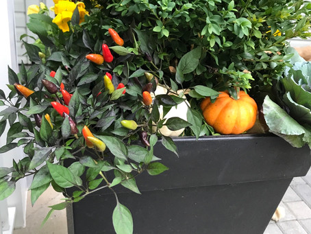 Fall containers 2.0 - because once just isn't enough