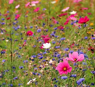 wildflower-meadow-4442606_1920_edited_ed