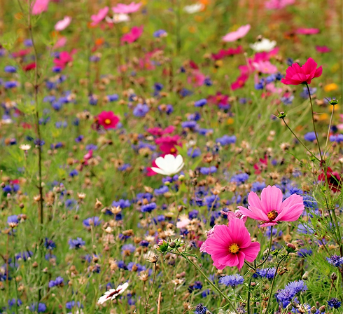wildflower-meadow-4442606_1920_edited_edited.png