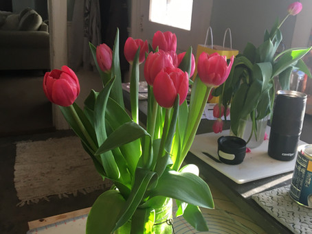 How to care for fresh cut tulips ?