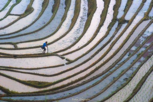 Rice fields abstract with man.jpg
