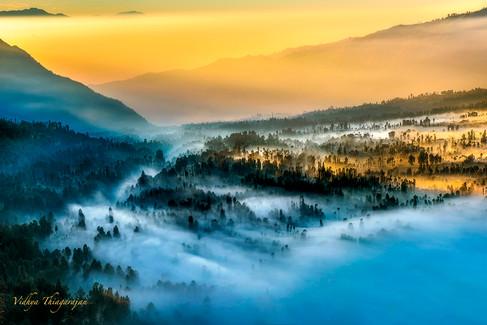 Bromo fog in trees 3.jpg