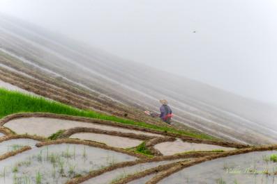 farmer in Rice Fields.jpg