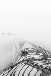 Misty Rice Terraces.jpg