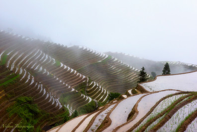 Ping An rice terraces.jpg