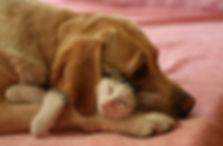 Sad dog and cat sleeping.jpg