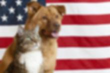 Dog and Cat flag.jpg