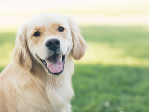 Woof! The Del Rey Dog Park Breaks Ground!
