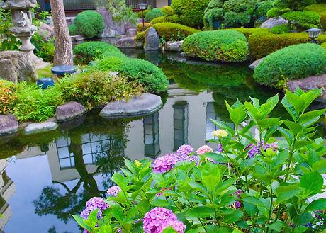 water-garden-pond-1080x773.jpg