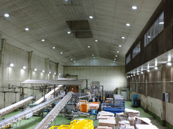 Factory Lighting Project in Japan