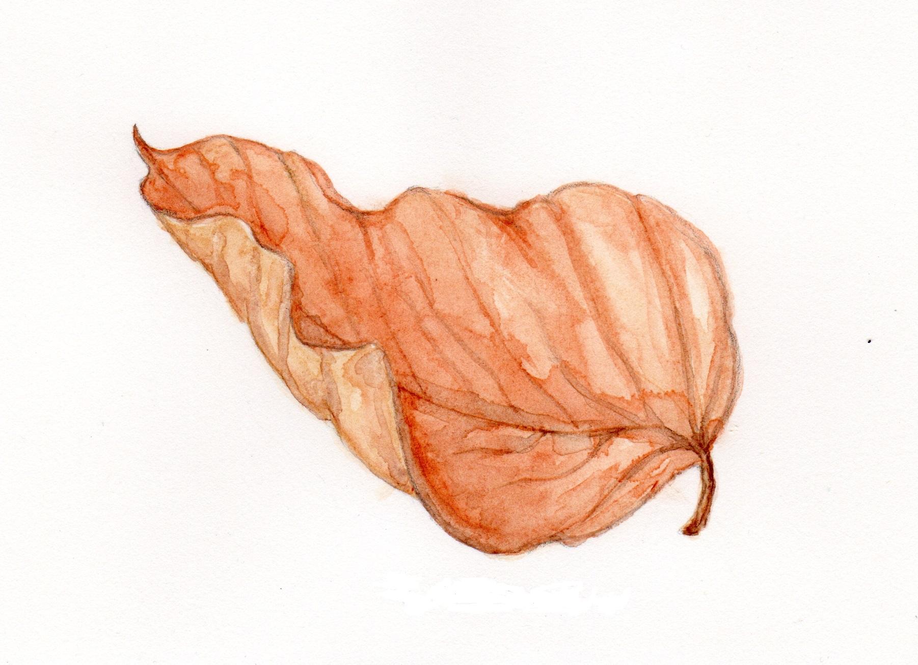 Autumn Birch Leaf by Elizabeth Oerte