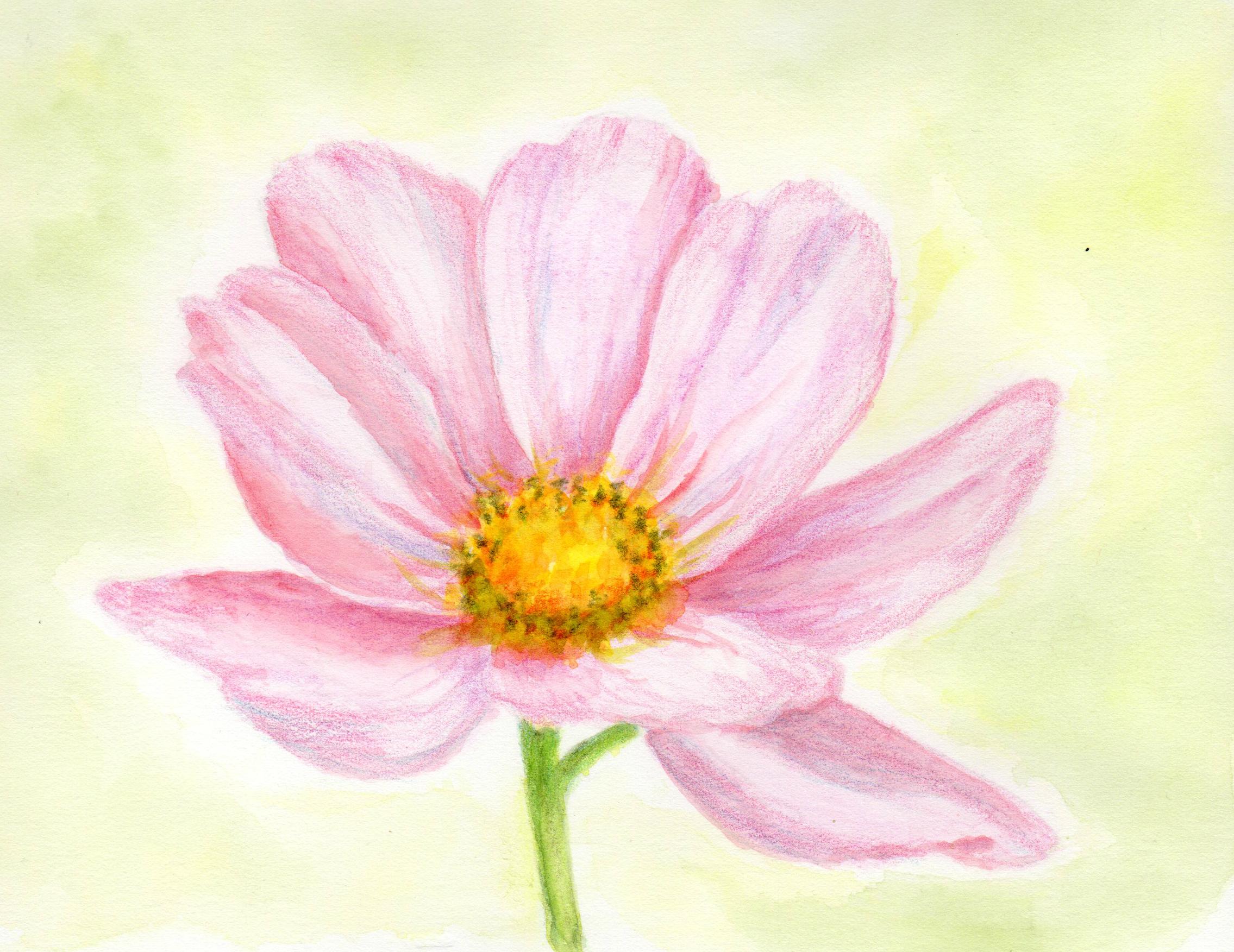 Cosmos Floral by Elizabeth Oertel